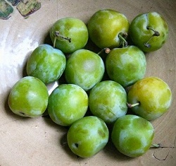 Reine claude plums