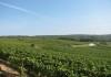 Champagne vineyards.