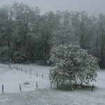 In Dordogne: A Winter's Woodcock Tale