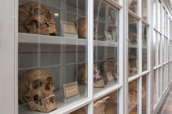Phrenology, Naval Medicine Museum, Rochefort
