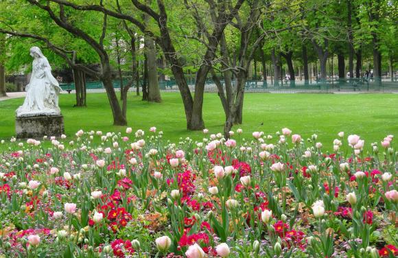 Tulips, Luxembourg Garden.